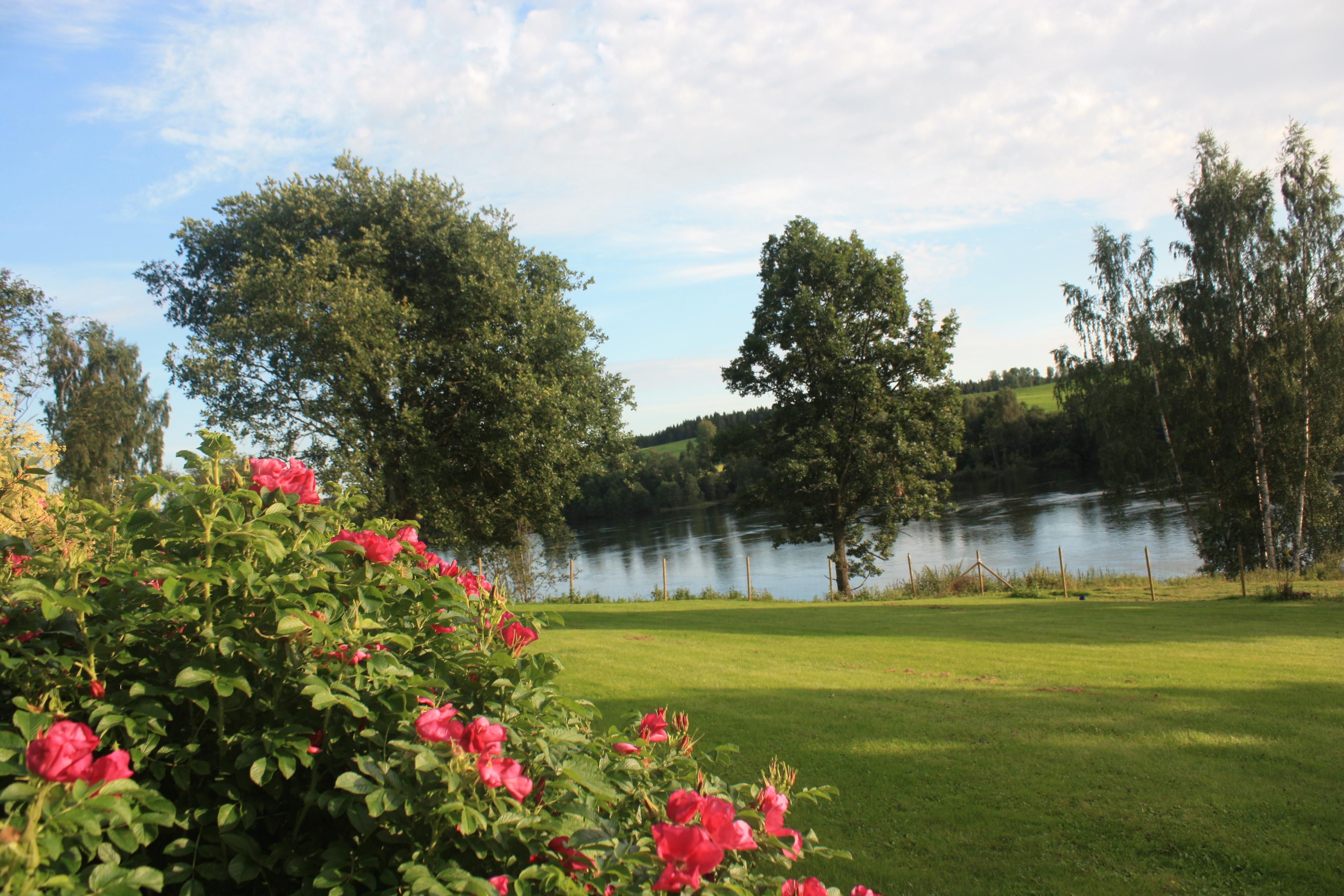 Rosehagen ved elven